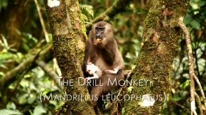 A Monkey Movie with aMessage