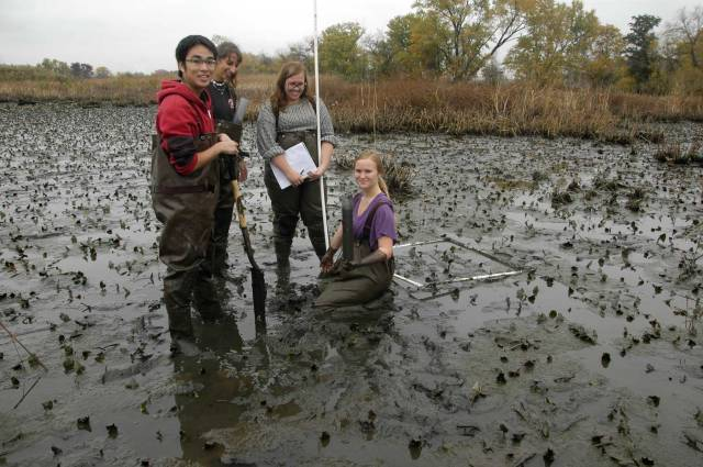 Students perform field research in a muddy marsh.