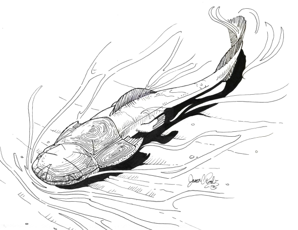Illustration of the Devonian armored fish Phyllolepis thomsoni as it may have looked when alive, by Jason Poole, Academy of Natural Sciences of Drexel University
