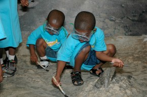 Science and the Senses at the Museum: Academy of Natural Sciences Gets MoreAutism-Friendly