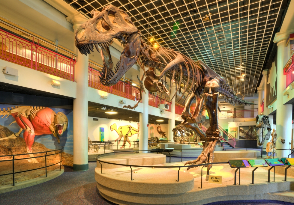 Dinosaur Hall at the Academy of Natural Sciences of Drexel University. Credit: Will Klein