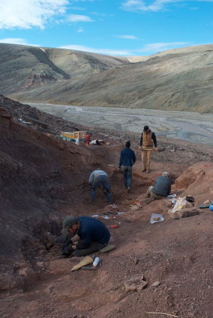Scientists dig for fossils at Ellesmere Island in the Canadian Arctic.