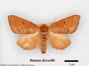 Drexel's Moth Goes Full Circle