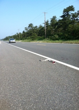 Northern pine snakes are at risk of death by car on New Jersey's highways.