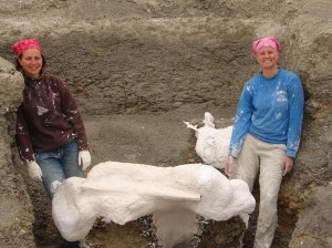 A single cervical (neck) vertebra from Dreadnoughtus, being jacketed by former Drexel students Jessica Battisto (left) and Alison Moyer (right)