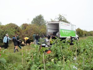 "Six Drexel students and six members of the local community spent three days gleaning at A.T. Buzby Farm in Woodstown, New Jersey, as part of a new course entitled ""Gleaning, Food Security and Agriculture."""