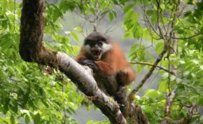Drexel Snapshot x2: Conserving Central African WildlifeDiversity