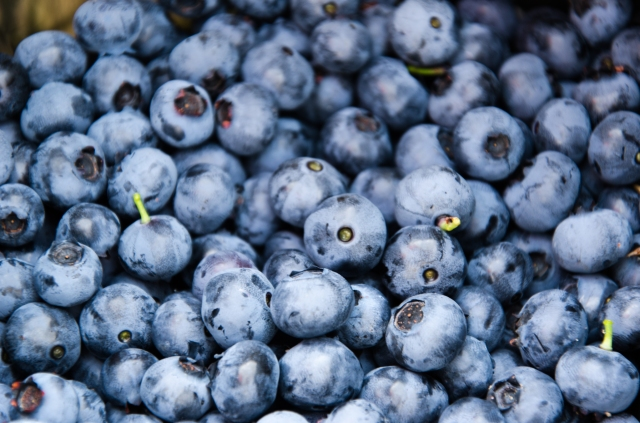Blueberries photo by rasseattle, CC BY SA 2.0