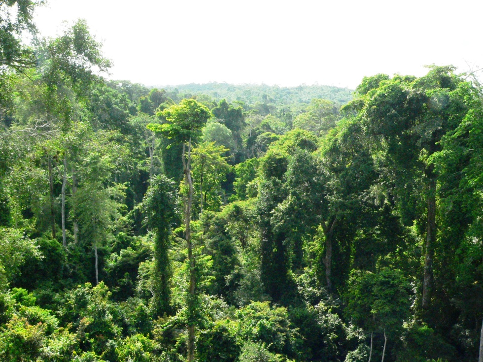 A view of the rain forest in Ghana's Kakum National Park. Photo credit: Nicole Arcilla.