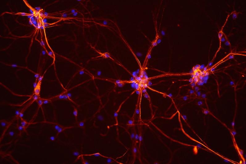 mouse-neurons