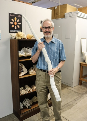 Rosenberg holding the long tubular shell of the giant shipworm