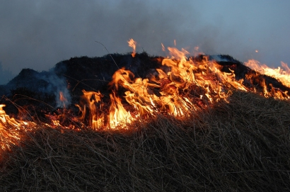 fire burning some tall grass as part of a controlled burn