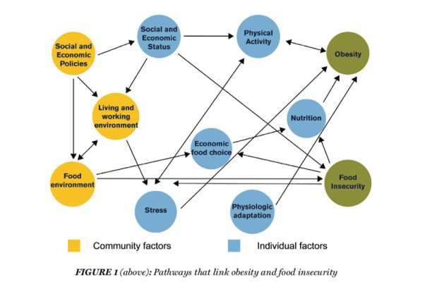 A web diagram showing all of the different pathways, including community factors and individual factors, that lead to obsity and food insecurity