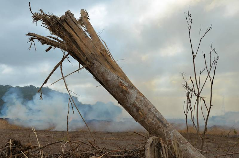 tree fire
